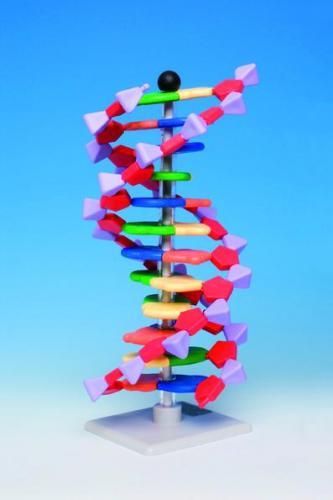 Molecuulbouwdoossysteem, miniDNA, 12 niveaus (LLG6261370) | LLG6261370